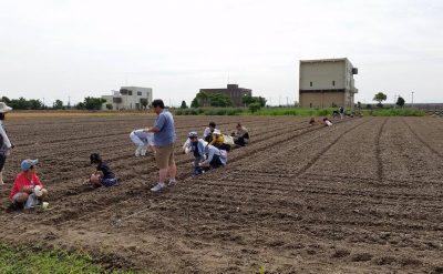 柳川ひまわり園 種まき 募集!