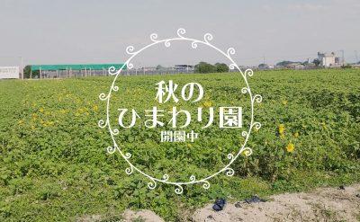 【閉園】秋のひまわり園|次回7月下旬予定