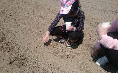 柳川ひまわり園の開園に向けて種まきしたい方を募集中!