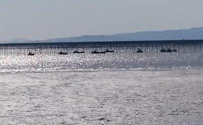 海苔の種付け準備