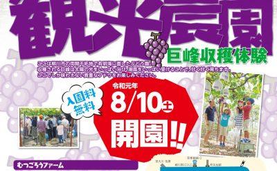 🍇第3回柳川観光ぶどう園情報🍇