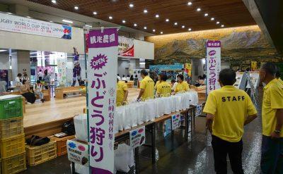 福岡県庁でぶどう販売します!